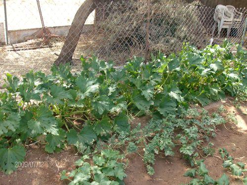 Garden 072
