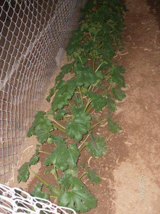 Garden 041