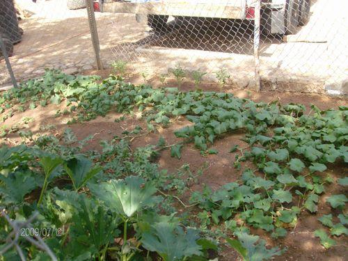 Garden 066